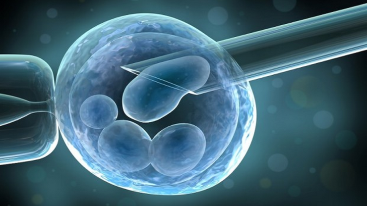 Why even good embryos don't Implant?